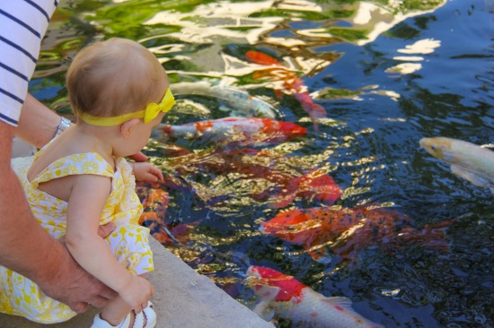 Feeding fish with daddy.