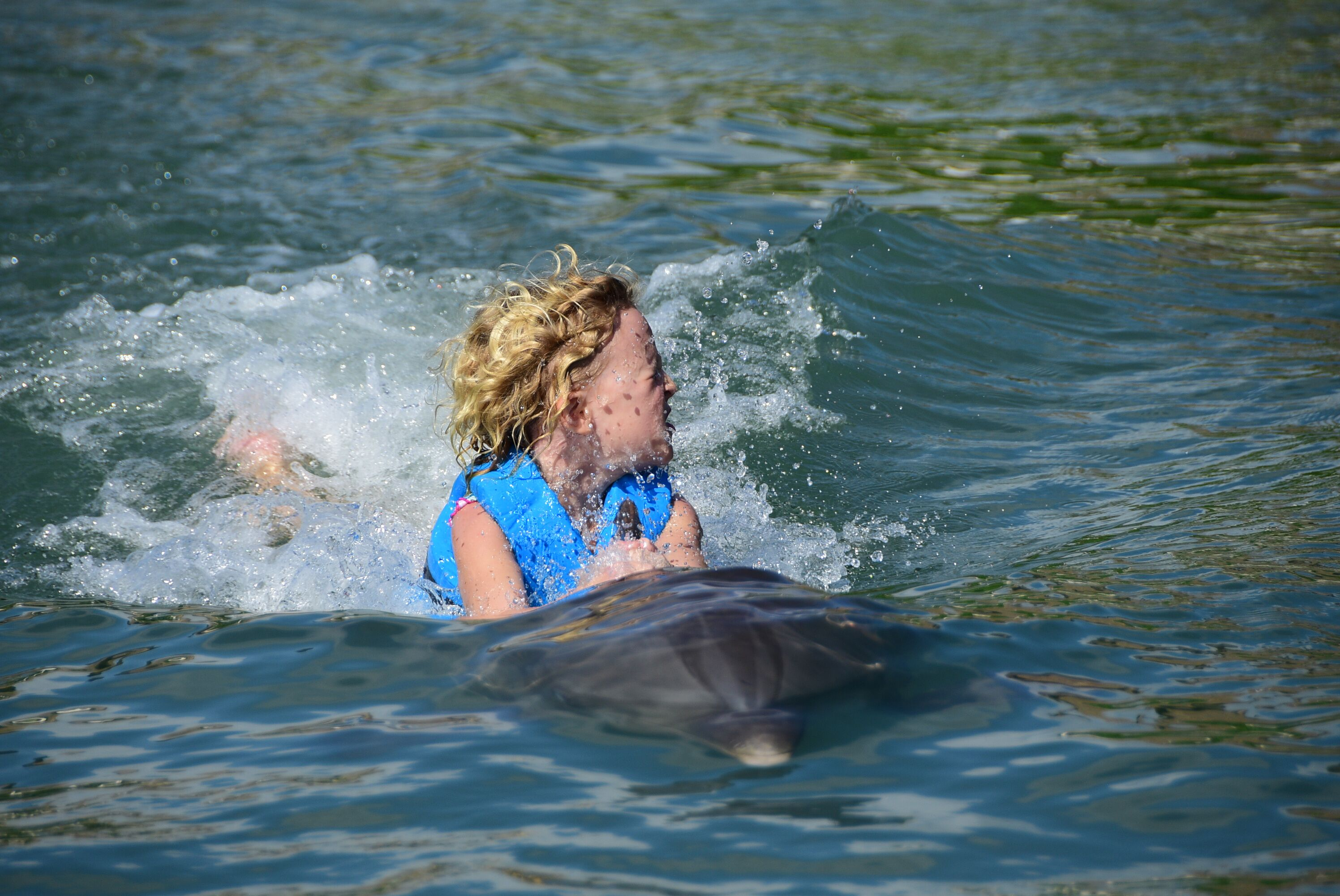 dolphins14