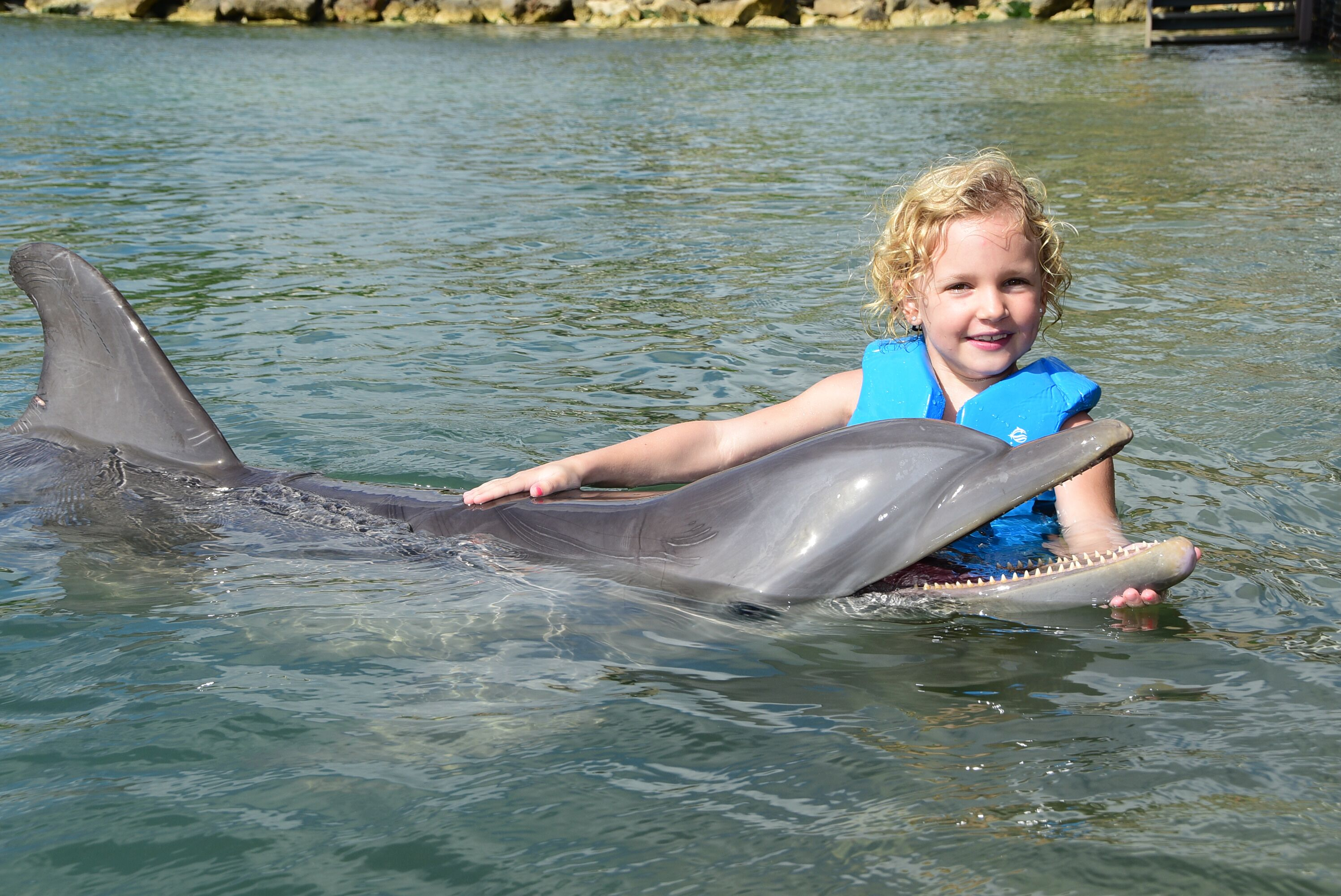 dolphins9